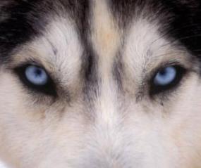 wolf false compassion