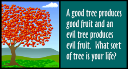 tree-good-fruit